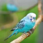 vogel_klein